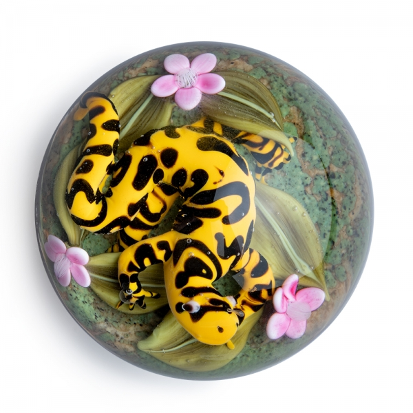 Clinton Smith: Tiger Salamander Paperweight