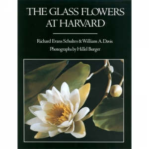 The Glass Flowers at Harvard